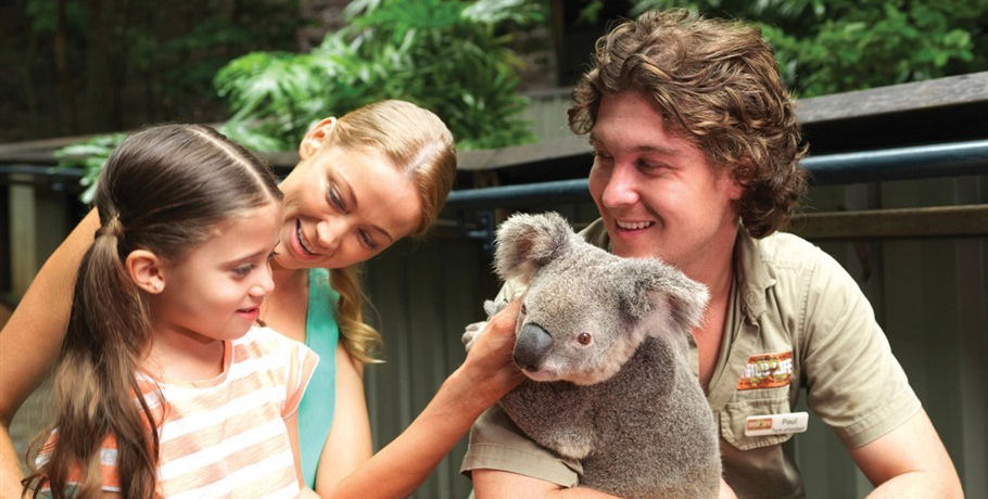 Koalas at Hamilton Island